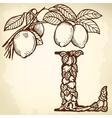 lemon Letter L vector image