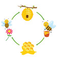 bee producing honey vector image