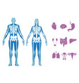 human body set vector image