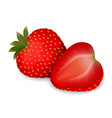 juicy delicious ripe strawberries vector image