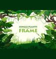 jungle plants frame vector image vector image