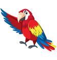 a colourful parrot character vector image vector image
