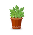arugula in a flower pot vector image