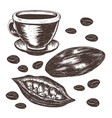 cocoa beans cocoa pod cup of cocoa vector image