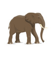 elephant animal icon of african savanna mammal vector image