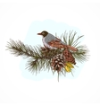 Pine branches with bird vector image vector image