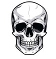 Skull Clipart vector image vector image