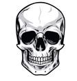 Skull Clipart vector image