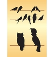 Bird silhouettes vector image vector image