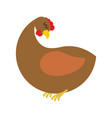 ginger hen isolated farm chicken on blue vector image