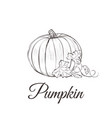 pumpkin sketch drawing with leaves vector image vector image