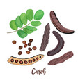 ripe carob pods leaves seeds and carob powder on vector image vector image