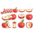 set of red apples vector image