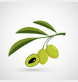 olive oil decorative olive branch vector image