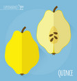 raw fresh quince vector image vector image