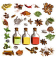 set of hand drawn spices for design vector image