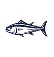 salmon fish on white vector image
