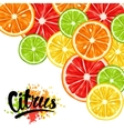 Background with citrus fruits slices Mix of lemon vector image vector image