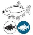 fish rudd vector image vector image