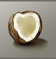 realistic coconut highly detailed empty coco nut vector image