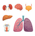 cartoon human organs set anatomy of body vector image vector image