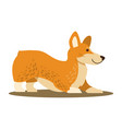 dog of playful mood icon vector image
