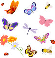 butterfly insects bee ladybug vector image