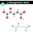 Ketoglutaric acid molecule vector image vector image