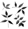 set of ash leaves silhouettes vector image vector image