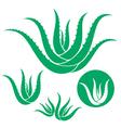 Aloe vector image vector image
