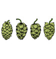 engraving style hops set vector image vector image
