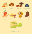piles of different nuts pistachio hazelnut almond vector image vector image
