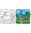 Little quail coloring book vector image vector image