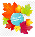 set of autumn colored leaves on white and vector image