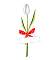 a fresh white tulip with red ribbon vector image vector image