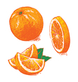 collection of fresh ripe oranges clip art vector image