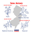 new jersey set usa official state symbols vector image