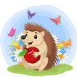 cartoon bahedgehog holding apple in grass vector image vector image