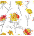 set of drawing calendula flowers vector image vector image