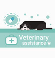 veterinary assistance clinic for animals pets vet vector image