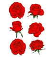 Red rose flowers and buds icons isolated on white vector image
