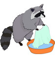 cute raccoon washes clothes vector image vector image