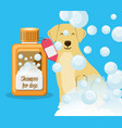 dog with shampoo bottle vector image vector image