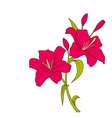 Linear Colored Sketch of Beautiful Lily Flowers vector image vector image