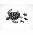 mother turtle and baby turtle on a white