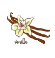 the vanilla - flower and spicy vector image