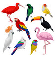 detailed set of various exotic birds wild vector image vector image