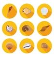 flat icons seashells vector image vector image