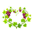 grapes with leaves in form heart vector image