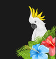 parrot white cockatoo with colorful hibiscus vector image